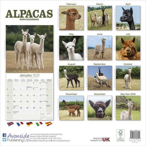 Alpaca Kalender 2021