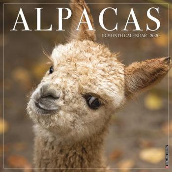 Alpacas Kalender 2021
