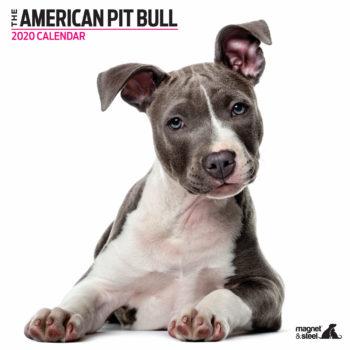 American Pit Bull Terrier Kalender 2020 Modern