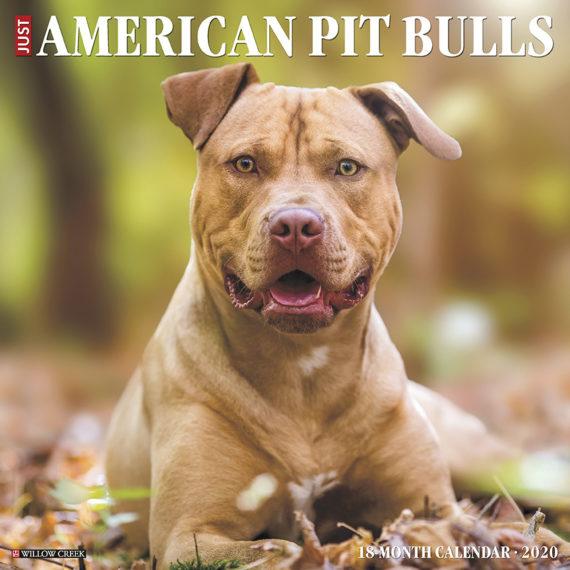 American Pit Bull Terrier Kalender 2020
