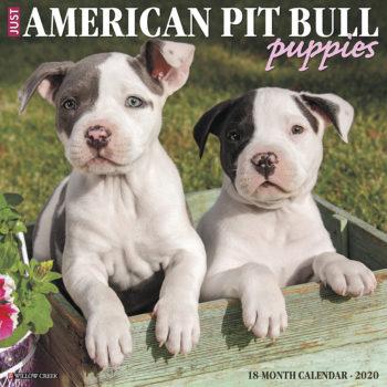 American Pit Bull Terrier Puppies Kalender 2020