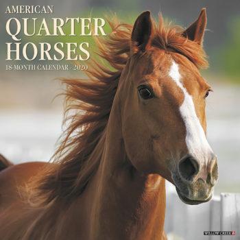 American Quarter Horse Kalender 2021