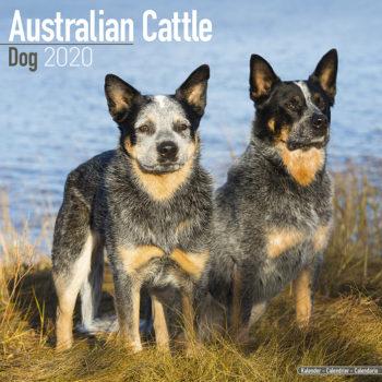 Australian Cattle Dog Kalender 2020