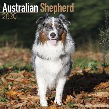 Australian Shepherd Kalender 2020