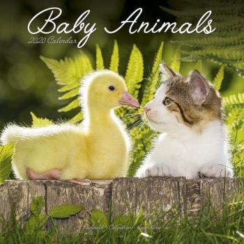 Baby Animals Kalender 2020