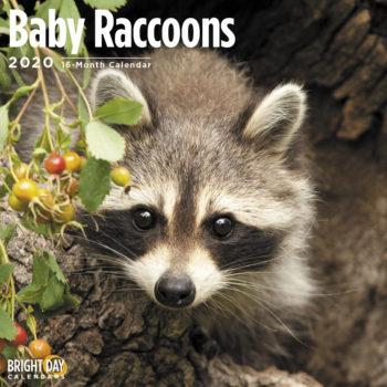 Baby Wasbeer Kalender 2020
