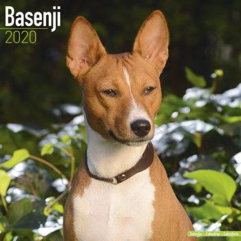 Basenji Kalender 2021