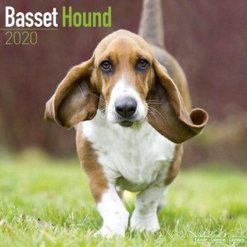 Basset Hound Kalender 2020