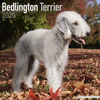 Bedlington Terrier Kalender 2020