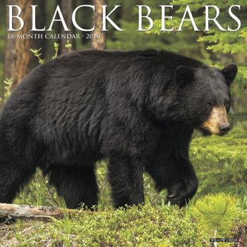 Black Bears Kalender 2020