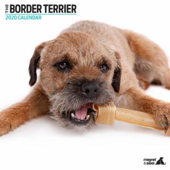 Border Terrier Kalender 2020 Modern