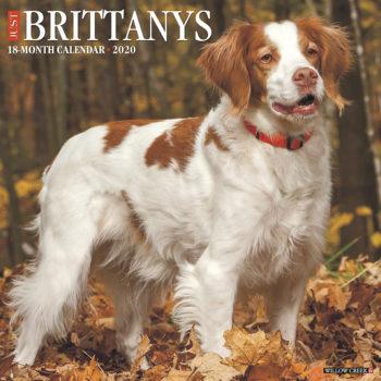 Brittany Spaniel Kalender 2020