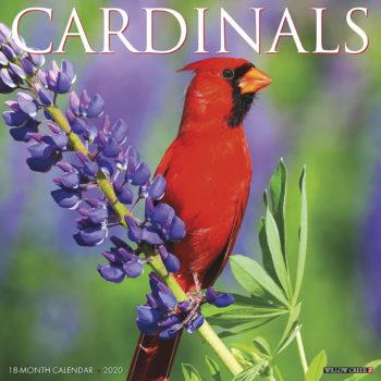 Cardinals Kalender 2020