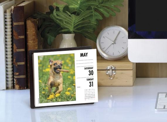 Chihuahua Kalender 2020 Boxed