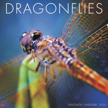 Dragonflies Kalender 2020