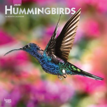 Hummingbirds Kalender 2020