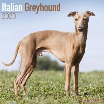 Italian Greyhound Kalender 2021