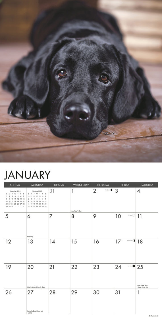 Labradorable Kalender 2020