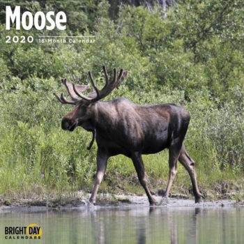 Moose Kalender 2020