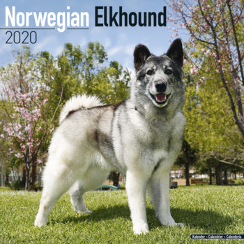 Noorse Elandhond Kalender 2021