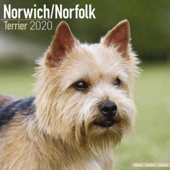 Norwich en Norfolk Terrier Kalender 2021