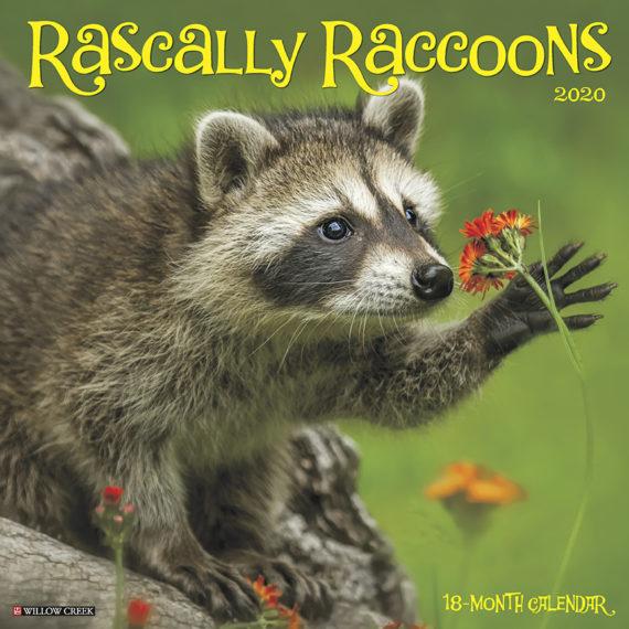 Rascally Raccoons Kalender 2020