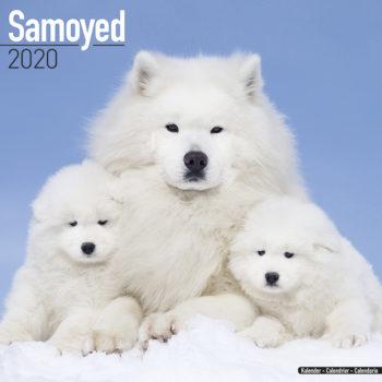 Samojeed Kalender 2021