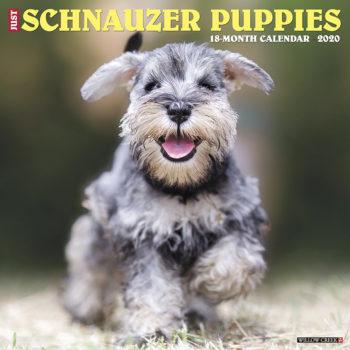 Schnauzer Puppies Kalender 2020