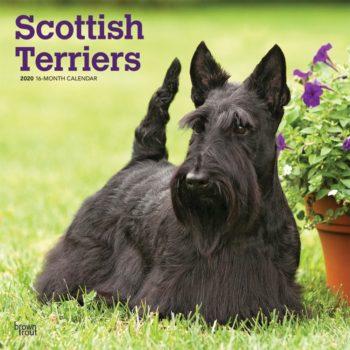 Schotse Terrier Kalender 2020