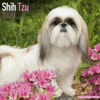 Shih Tzu Kalender 2020