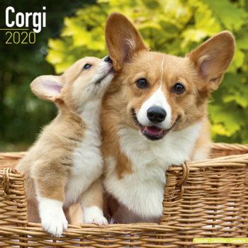 Welsh Corgi Kalender 2021