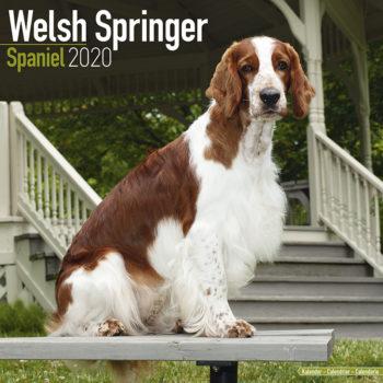Welsh Springer Spaniel Kalender 2020