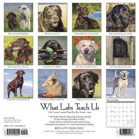 What Labs Teach Us Kalender 2020