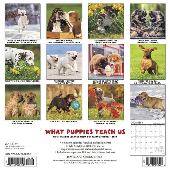 What Puppies Teach Us Kalender 2020
