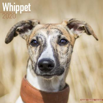 Whippet Kalender 2020