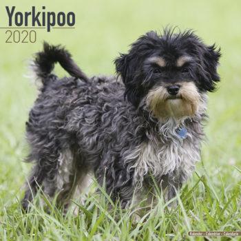 Yorkipoo Kalender 2020
