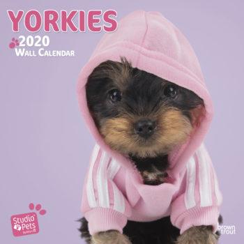 Yorkshire Terrier Kalender 2020