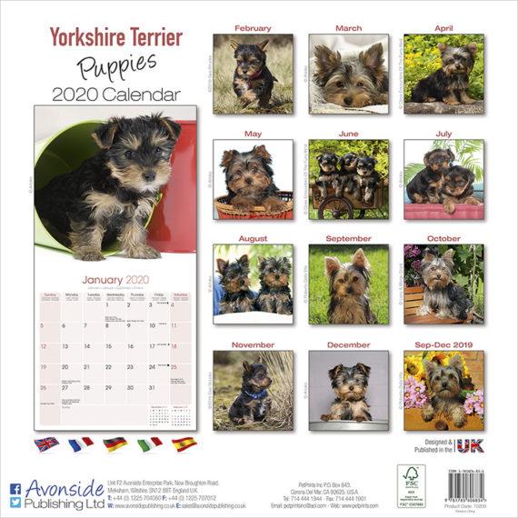 Yorkshire Terrier Kalender Puppies 2020