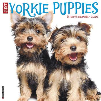 Yorkshire Terrier Puppies Kalender 2020