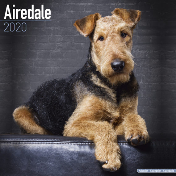 Airedale Terrier Kalender 2021