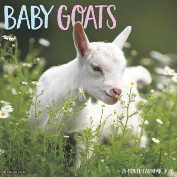 Baby Goats Kalender 2020