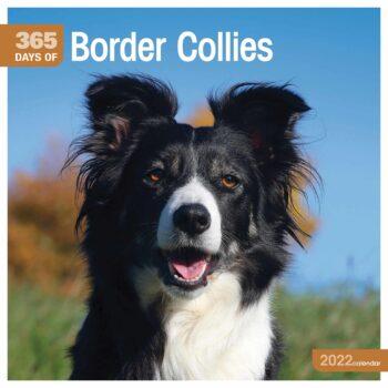 365 Days Border Collie Kalender 2022